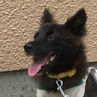 5〜6ヶ月月の琉球犬MIXの子犬❣️