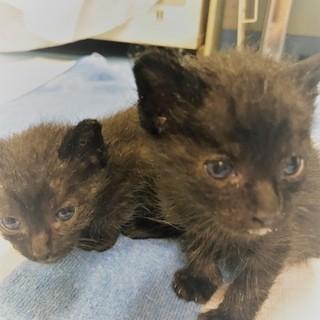 黒猫仔猫4兄弟