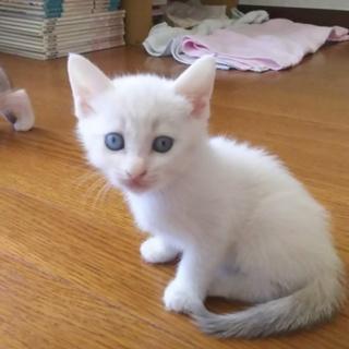 6月19日生まれ。白系 ブルーアイのようです