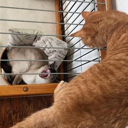 先住猫全員とご対面した捨て猫ケージ姫