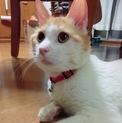 優しいイケメン★先住猫OK!★穏やかな性格