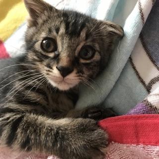 垂れ耳子猫ちゃん