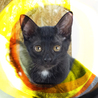 生後3ヶ月♡甘えん坊金目の黒猫美少女ひかり