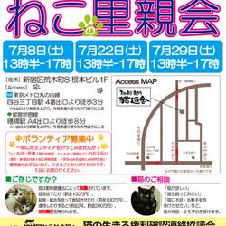 7月29日(土)地域猫から社会猫へ 四谷猫廼舎(ねこのや)里親会(ボランティアも募集中)