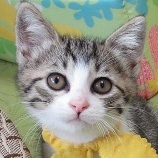 7/30池袋★ミッキーくん★キリリと可愛いチビ男子