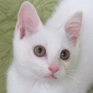 9/17池袋★マリオくん★元気な白ネコ皇子