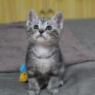 1カ月ちょっとの超甘えん坊な子猫