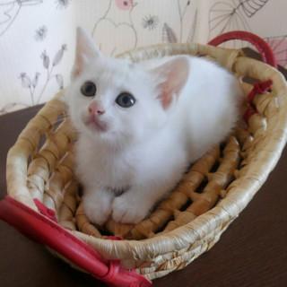 可愛い白猫の女の子です
