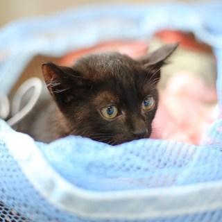 可愛い黒猫さん女の子です 甘えん坊