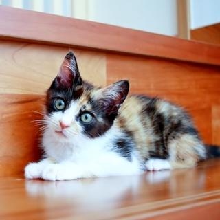 かわいい三毛猫さん よいご縁がありました