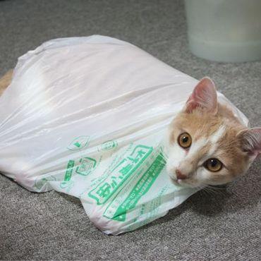 虐待ではありませんよ。好きなんです袋が。