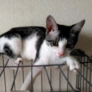 猫の魅力満載、ツンデレな遊び好き(仮名:みくちゃん