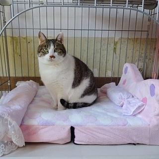 大人猫さんとまったりしませんか?