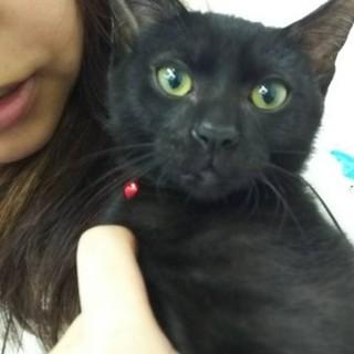 黒猫のこんぶちゃん。