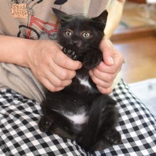 白ビキニ着用の黒猫男子「クマちゃん」
