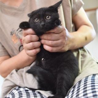 黒猫ビクちゃん(5月上旬生まれ)女子