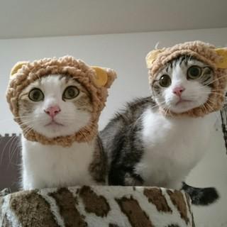 *雑種の猫姉妹の里親になって下さい*
