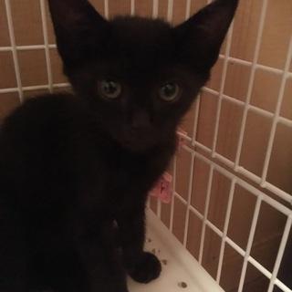 2ヶ月の元気な黒猫くん♂です