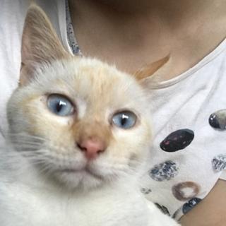 青い目が綺麗な可愛い女の子です。
