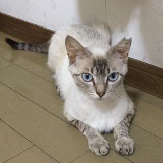 珍しい❤️綺麗な洋猫ちゃん