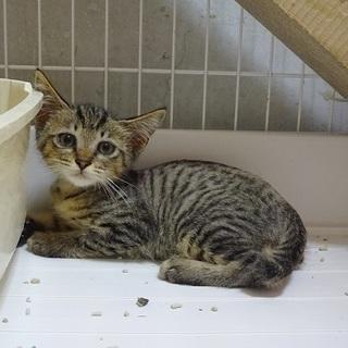 灼熱地獄の小屋に閉じ込められていた子猫