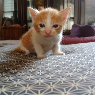猫の里親を募集しています。