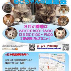 ♪しあわせにゃんこ♪猫ちゃんの譲渡会IN日本橋馬喰町 サムネイル1