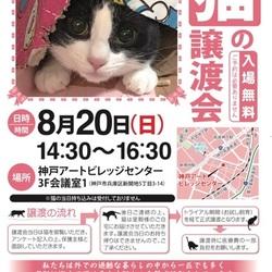 猫の譲渡会in神戸アートビレッジセンター サムネイル3