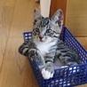 多頭飼い崩壊からのSOS 猫に罪はありません サムネイル5