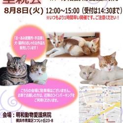 8月8日(火)子猫祭り里親会をやります!(別日のお見合いも可能!) サムネイル1