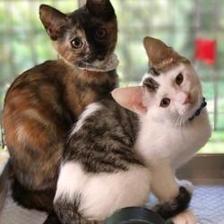 8月8日(火)子猫祭り里親会をやります!(別日のお見合いも可能!) サムネイル2