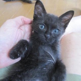 動画あり人懐こい黒猫じょいなーちゃん