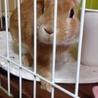 【急募‼】ウサギの里親さん