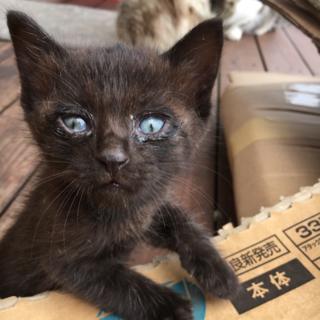 きゅうりサイズ 黒子猫の里親募集中です!