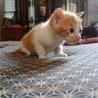 猫の里親を募集しています。 サムネイル2