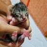 産まれたての保護猫ちゃんです