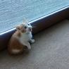 猫の里親を募集しています。 サムネイル4