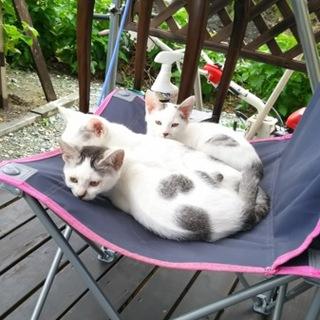 3兄妹の猫ちゃんです