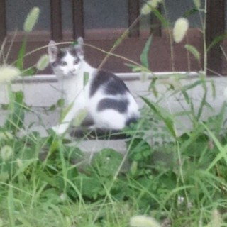 野良猫(子猫黒白)