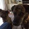 元気で賢い琉球犬mixの子犬 サムネイル6