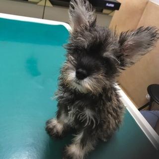 ☆2ヶ月☆可愛い子犬