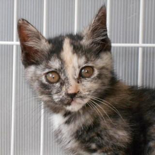 パステル調のサビ猫 ♪ 生後3ヵ月