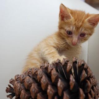 野良の子猫可愛がって下さる方いませんか
