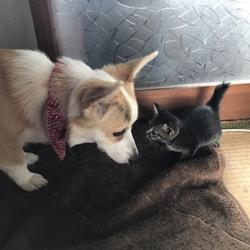 子猫を保護しました。