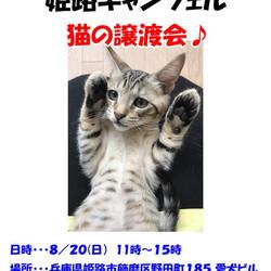 動物保護施設 姫路キャンフェル 猫の譲渡会