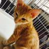 猫も人もまっしぐら☆淡いトラ柄の男の子 サムネイル2