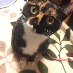 助けてください。猫が行方不明になりました。