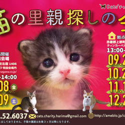 「猫の里親探しの会」10月22日(日)
