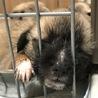 【募集停止】生後1ヶ月、雑種の仔犬「クローバー♀」