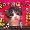 「猫の里親探しの会」11月19日(日)